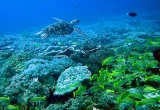 Mozambique Scuba-Diving Holiday
