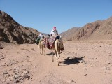 The Sinai Desert – Coast to Coast (Egypt)
