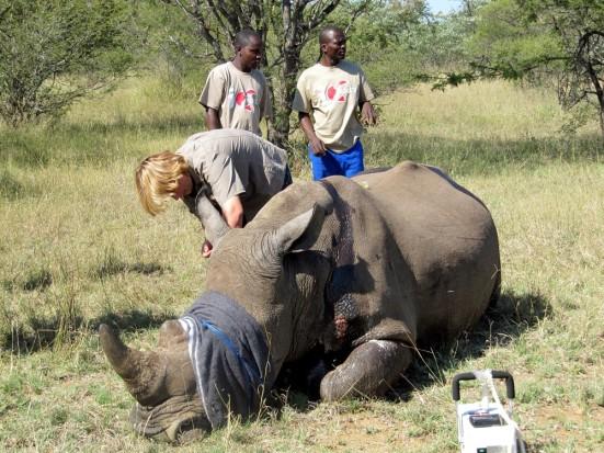 Rhino been treated 1